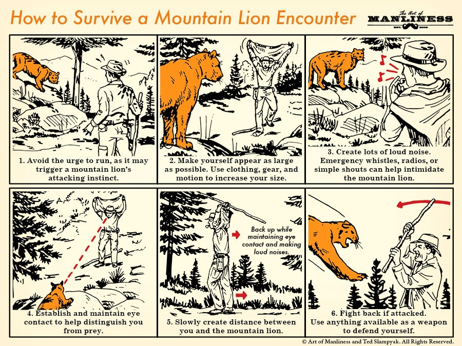 mountain lion on the trail illustration diagram