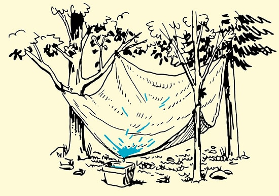 tarp collecting water into container forest illustration