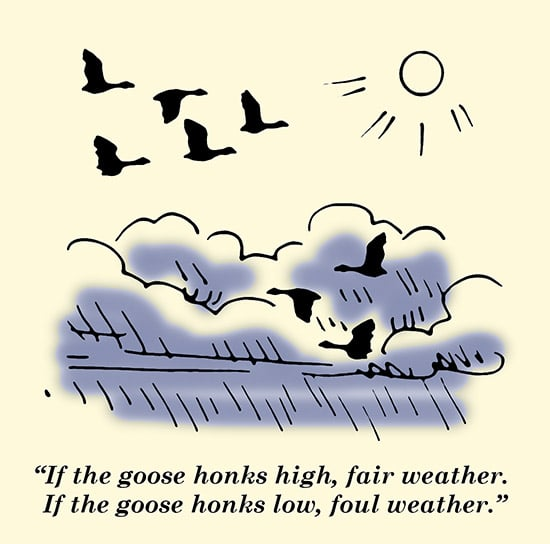 goose honks high fair waether proverb geese in sky illustration