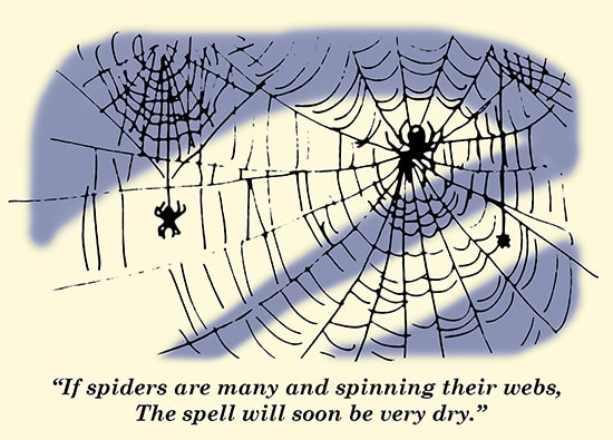 spiders spinning webs weather proverb spider web illustration
