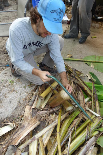 Cutting up the banana tree trunk. You'll use pieces of it now to stuff the pig, and pieces of it later to line the cooking pit.