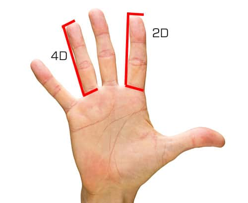 2D/4D finger digit ratios diagram index finger and ring finger.
