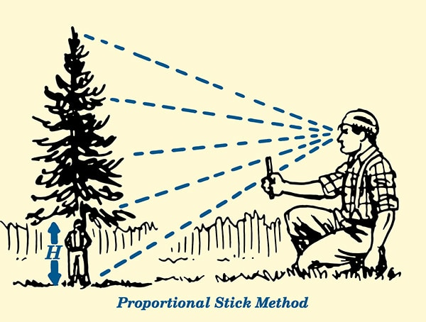 Proportional stick method for estimating tree height illustration.