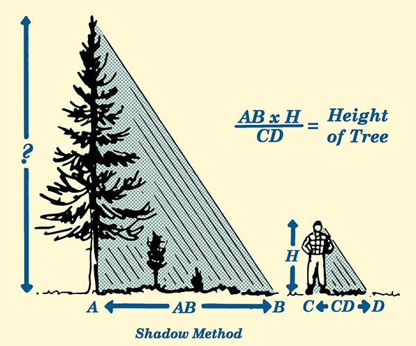 shadow method for estimating tree height illustration