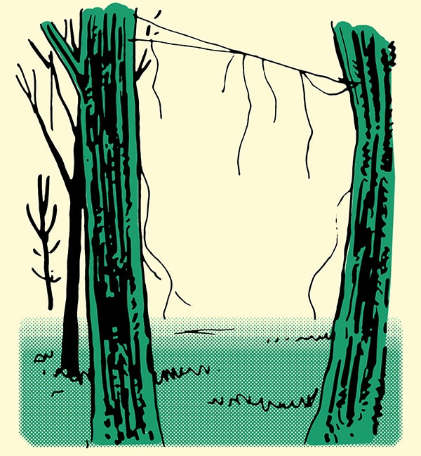 broken spider web between two trees how to track a person illustration
