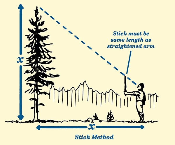 Stick method for estimating tree height illustration.