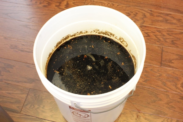 Homebrew beer in fermentor bucket.