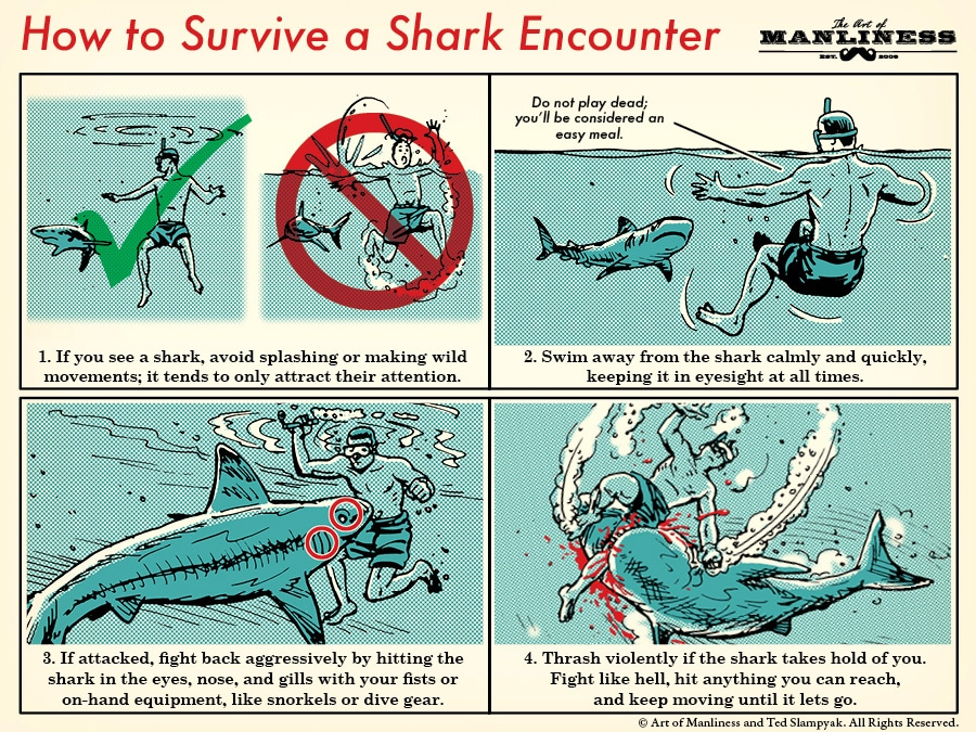 how to survive a shark attack step-by-step illustration diagram