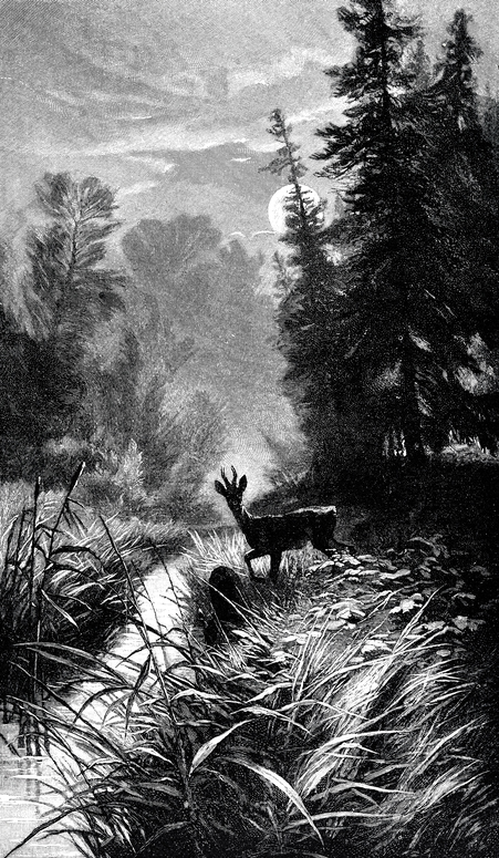 acquainted with the night a story of night walks experience essay Brave companions: portraits in history  each essay was fascinating on its own covering a wide range of subjects from game changing  west with the night,.
