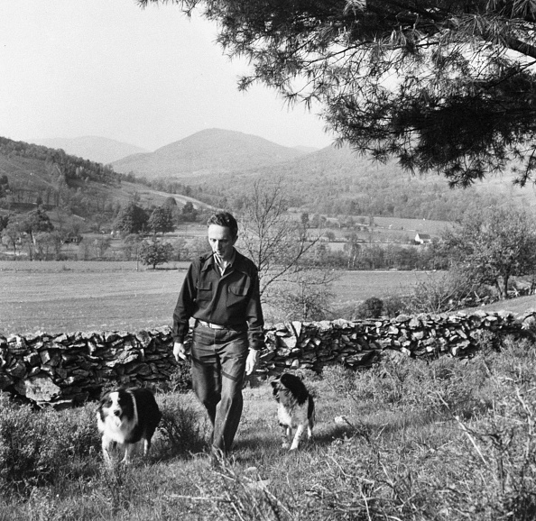 Man walking with his dogs while smoking pipe in a wide field.