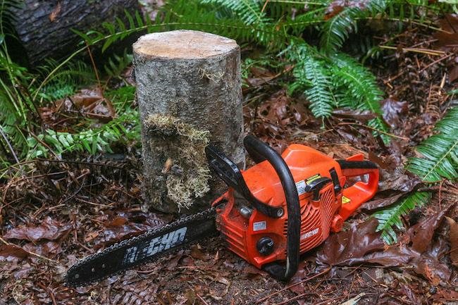 Tree log and chain saw.