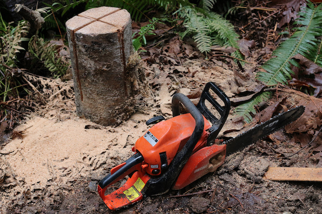 Cuts in tree log with chain saw.