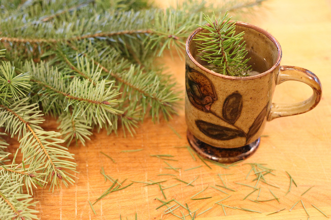 Fresh pine needles in cup.