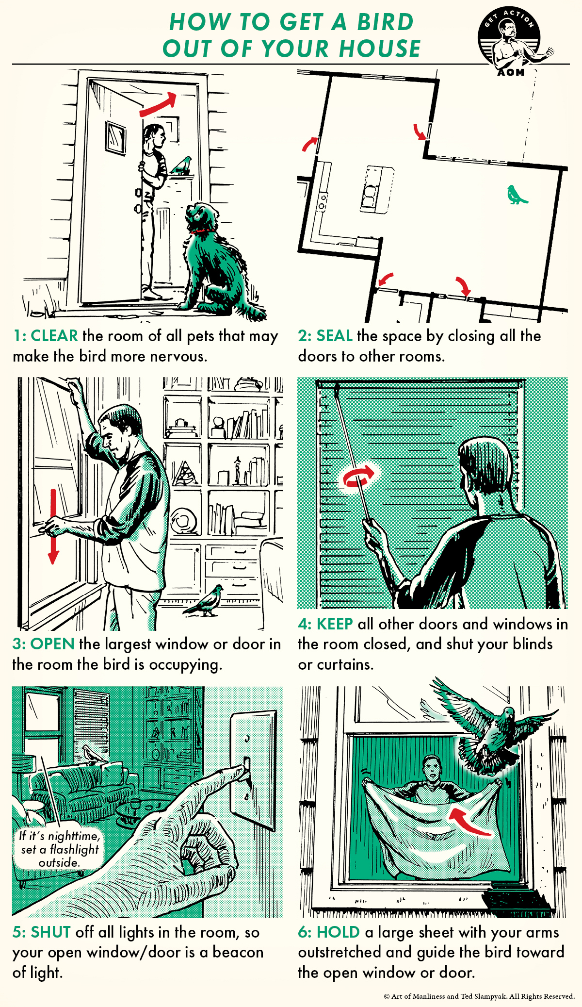 Illustration of getting birds out of the house.