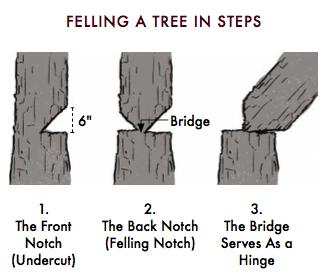 Steps of feeling a tree.