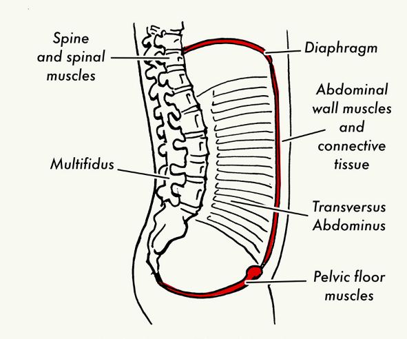 Structural view of back bone with labeling.