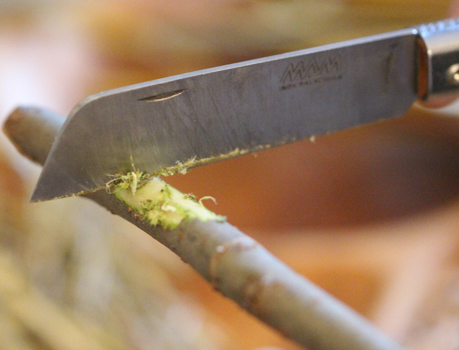 Scraping away exterior bark using a pocketknife.