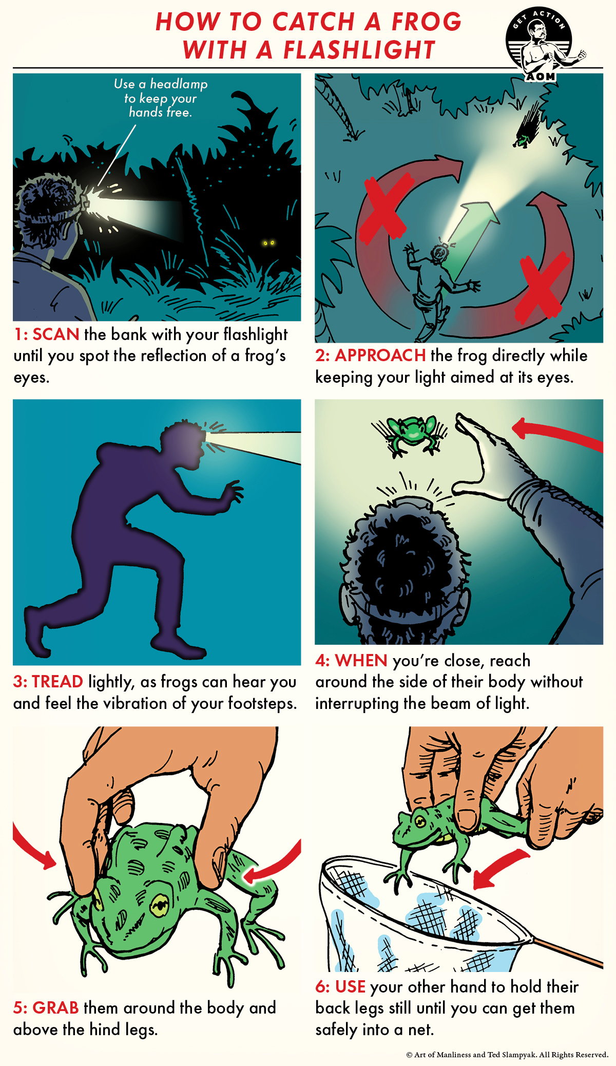 Comic guide how to catch a frog with flashlight.