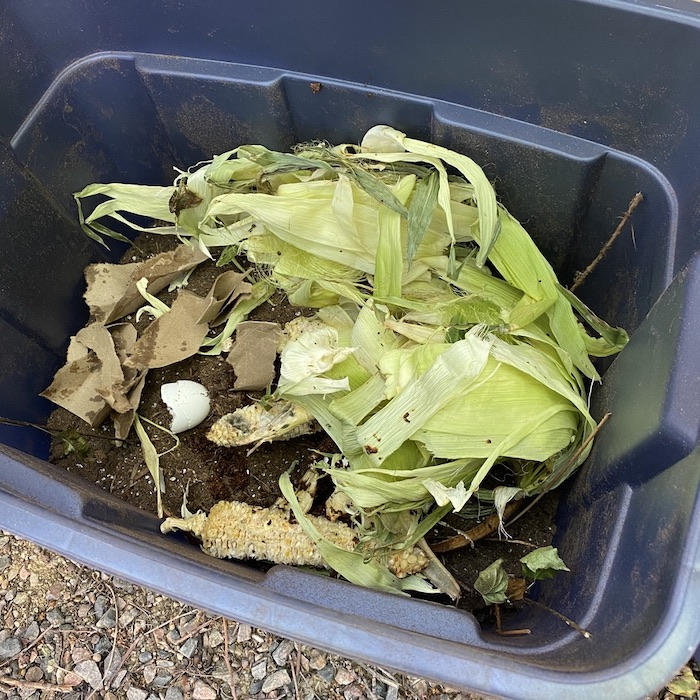 Kitchen scraps such as corn and eggs are thrown in plastic bin.