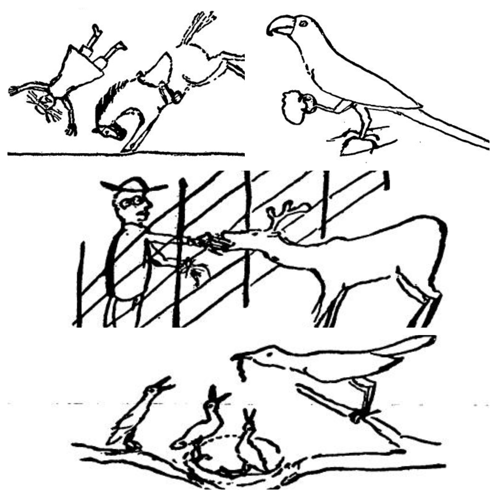 Handmade drawing of different animals and birds.