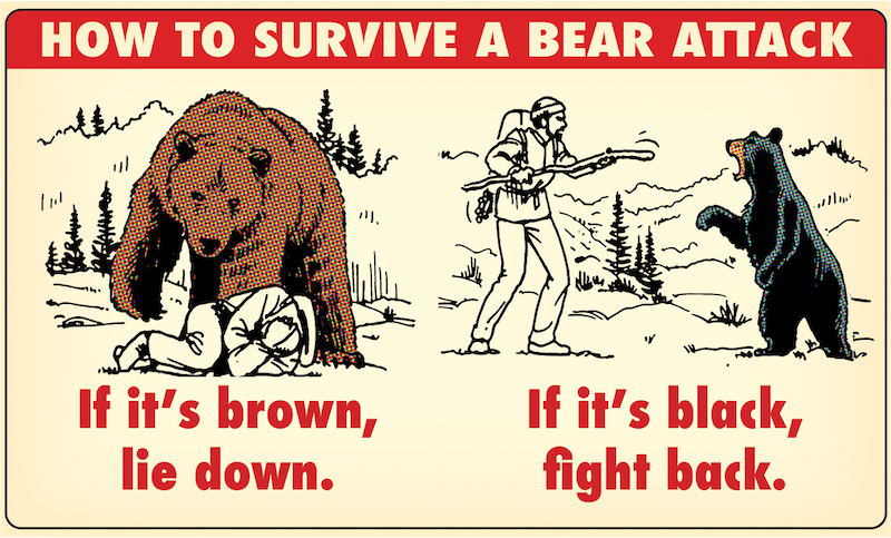 Comic guide how to survive bear attack brown vs. black bears.