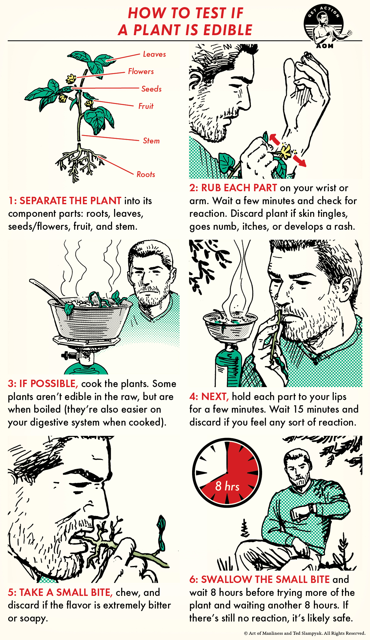 illustrated step-by-step of universal plant edibility test.